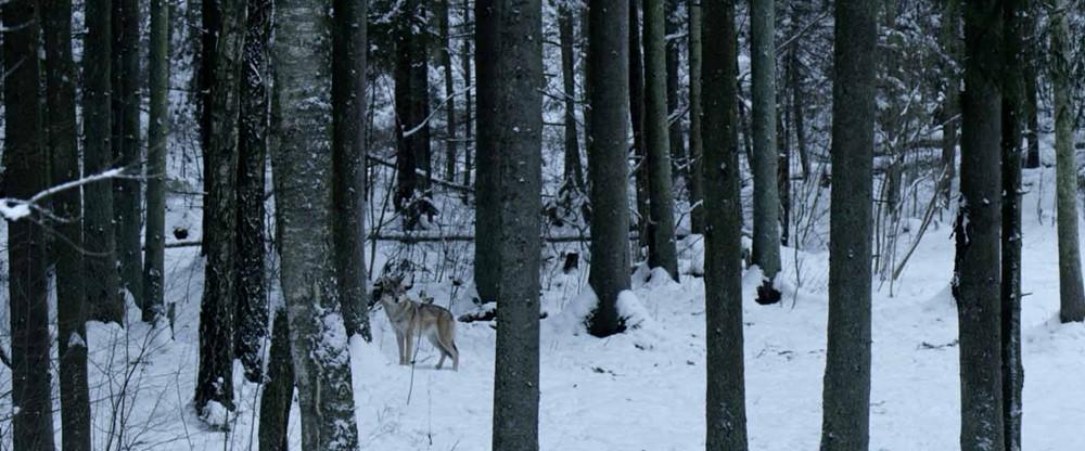 Dans les bois documentaire image