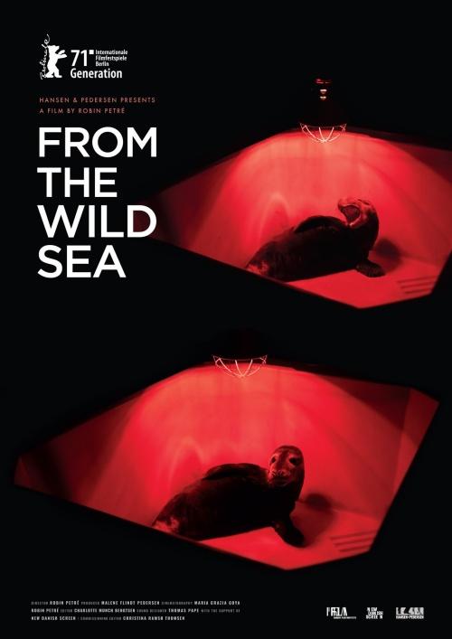 From the wild sea film documentaire affiche réalisé par Robin Petré