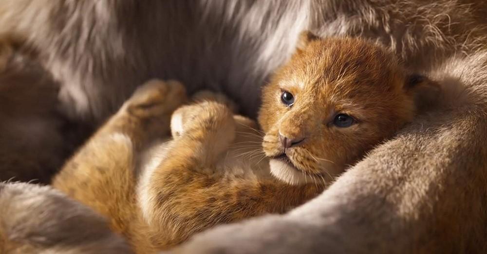 Le Roi Lion 2019 film animation 3D image